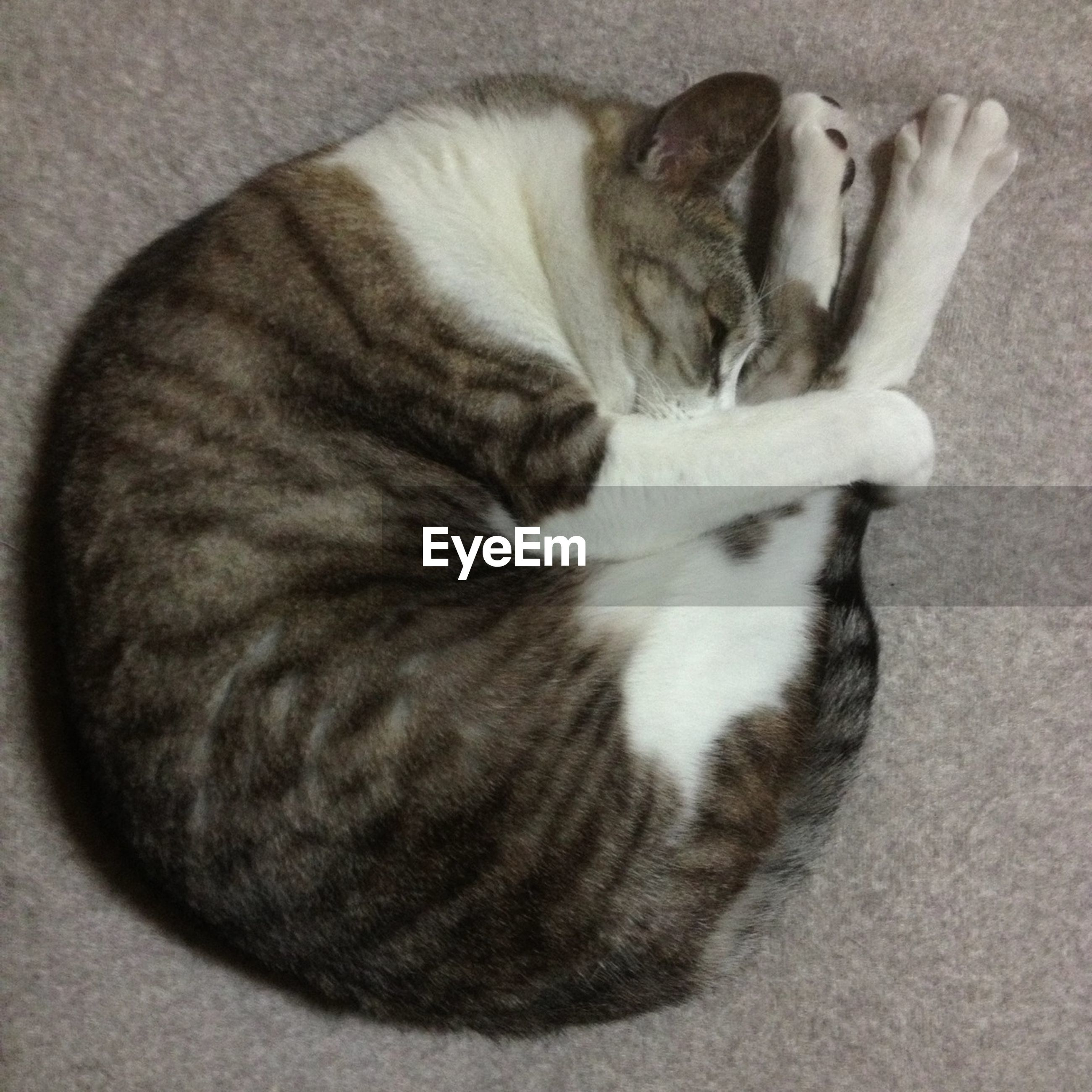 domestic animals, animal themes, pets, domestic cat, one animal, cat, mammal, feline, relaxation, indoors, sleeping, resting, lying down, high angle view, whisker, close-up, eyes closed, no people, comfortable, zoology