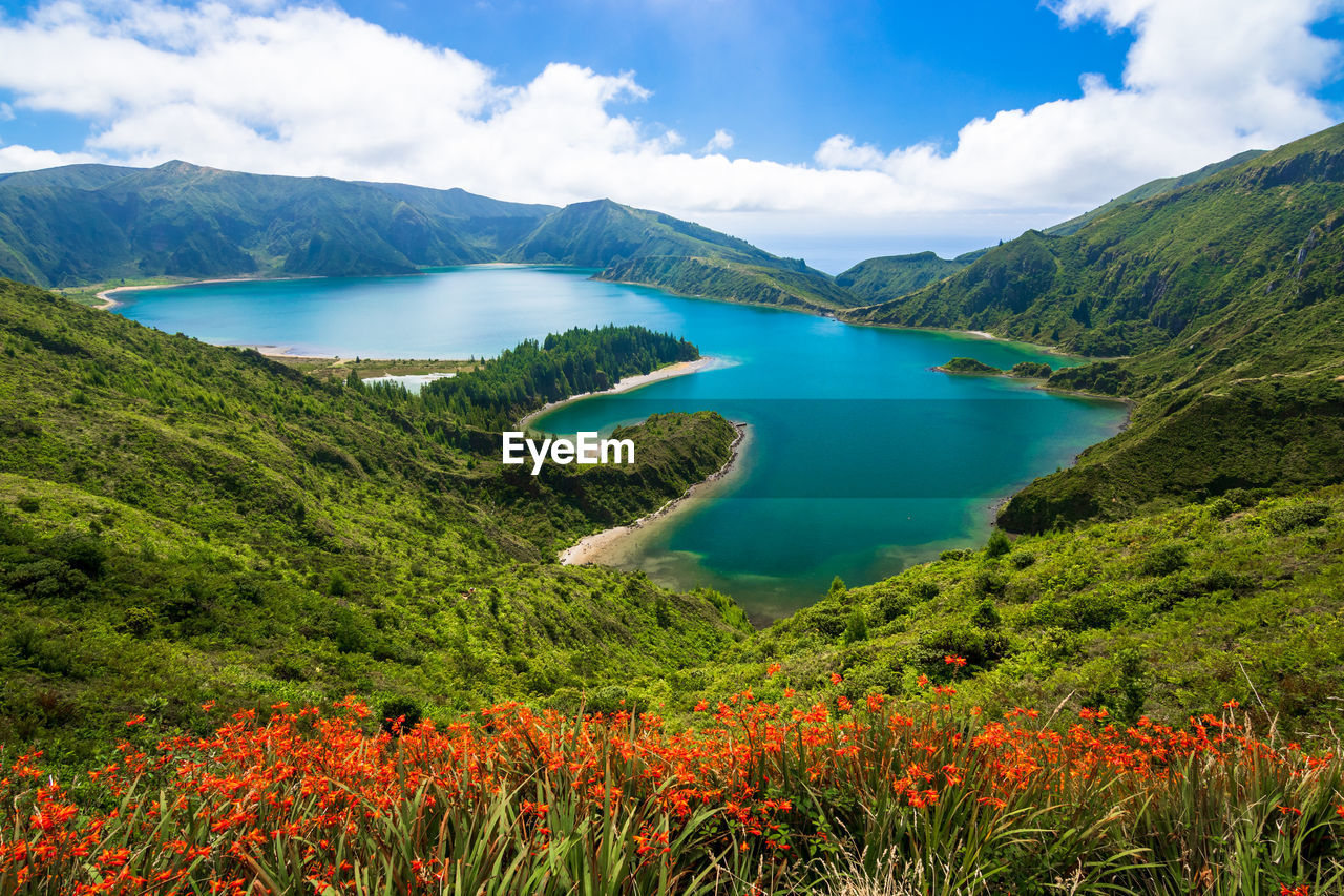 View of turquoise water of lagoa do fogo, flowers in foreground in sao miguel island, azores