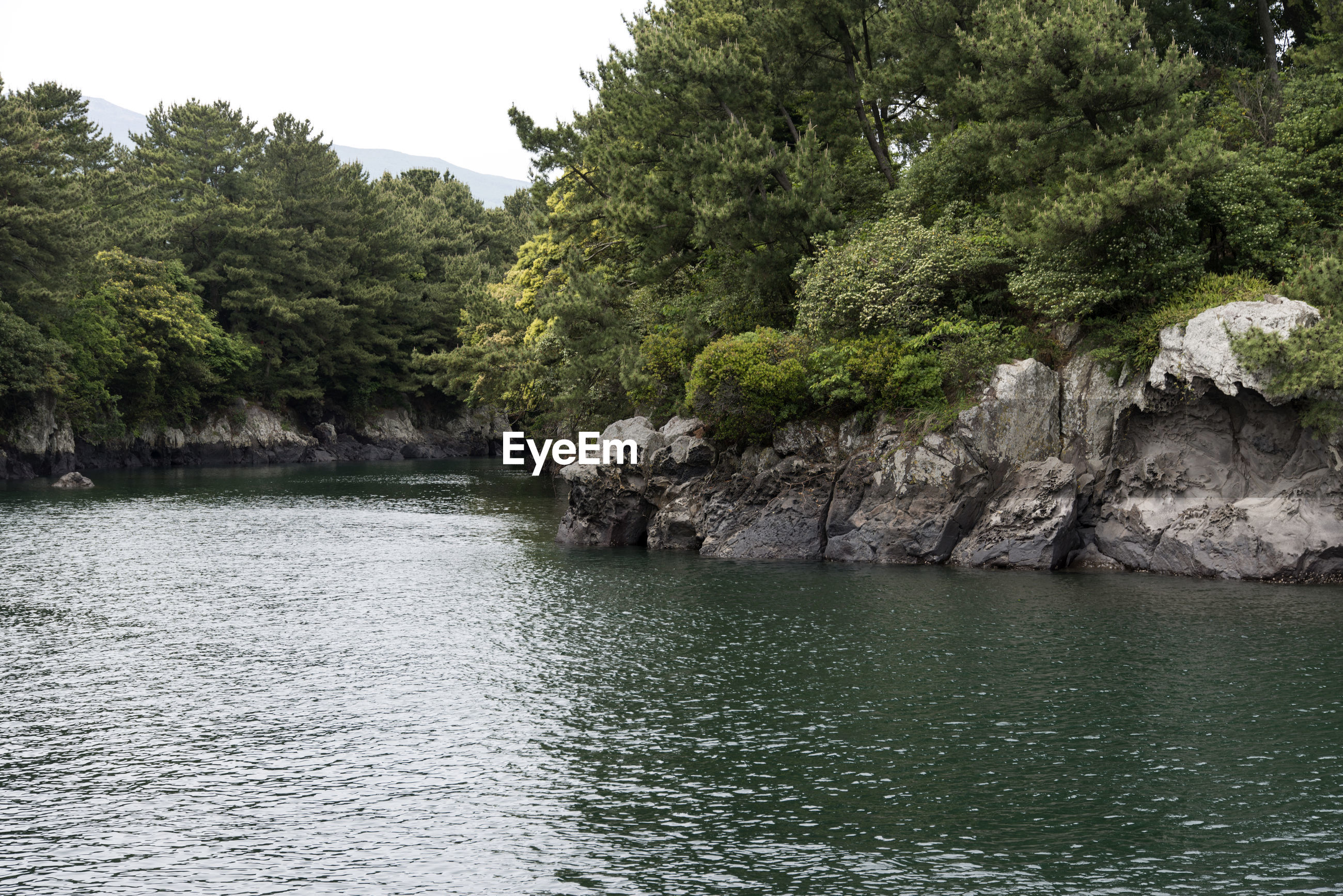 SCENIC VIEW OF RIVER AGAINST TREES