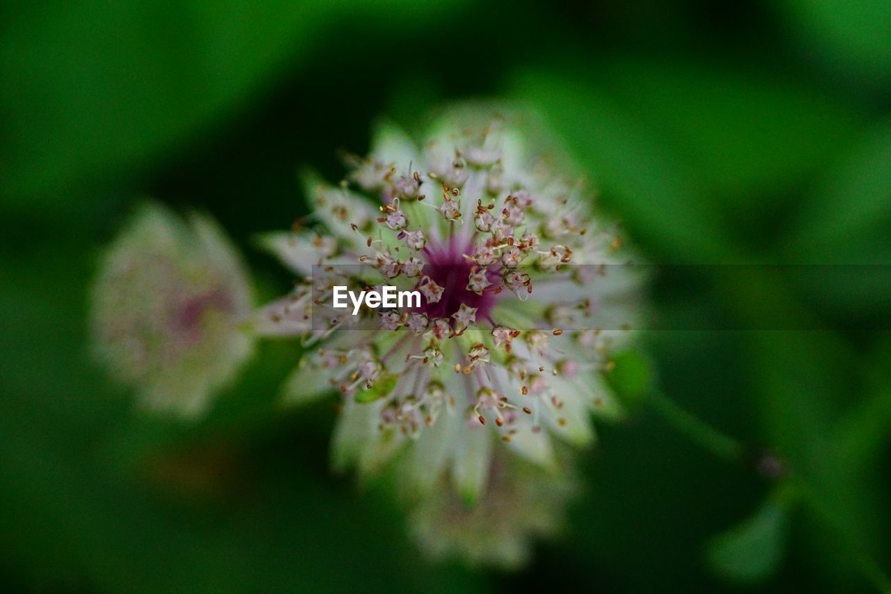 flower, fragility, growth, selective focus, nature, petal, beauty in nature, freshness, flower head, blossom, botany, pink color, no people, springtime, plant, day, close-up, blooming, outdoors