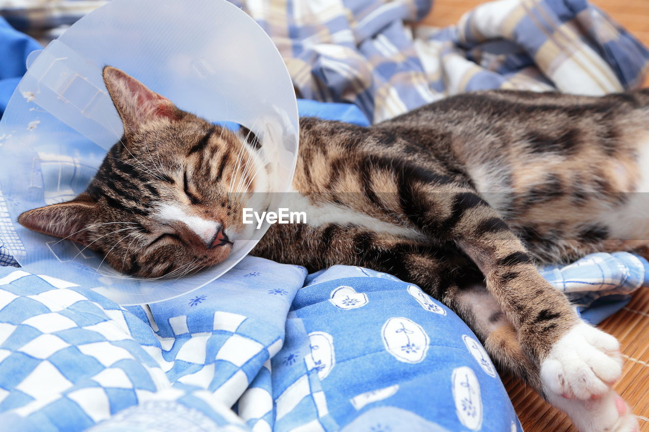 Close-Up Of Cat Wearing Protective Collar Resting On Bed