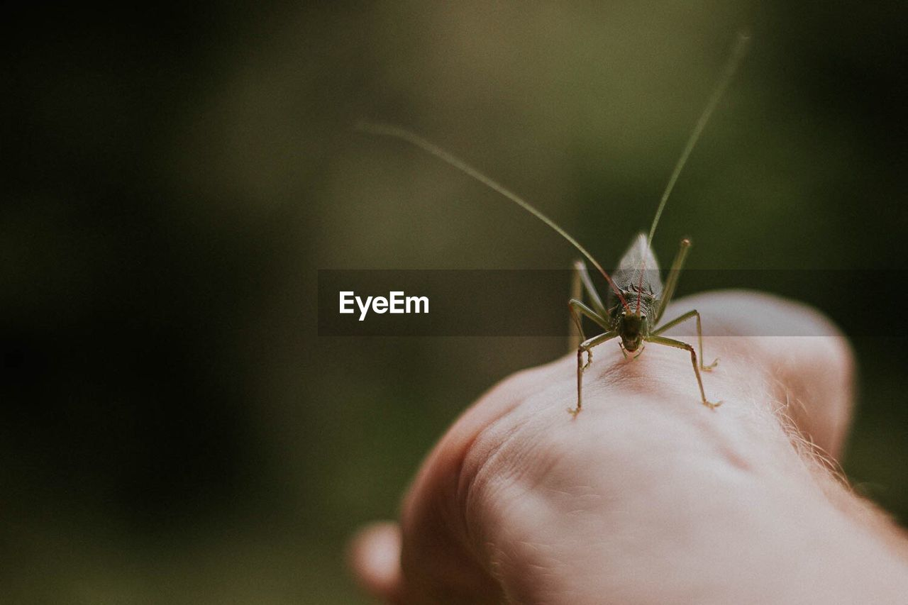 Cropped Image Of Hand With Insect