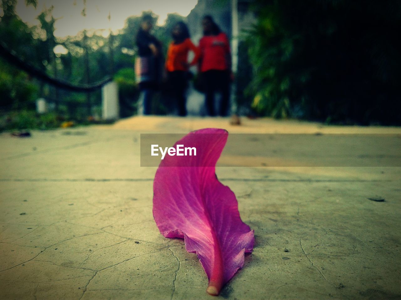 leaf, focus on foreground, fragility, petal, nature, close-up, outdoors, flower, day, pink color, red, autumn, no people, beauty in nature, flower head, freshness