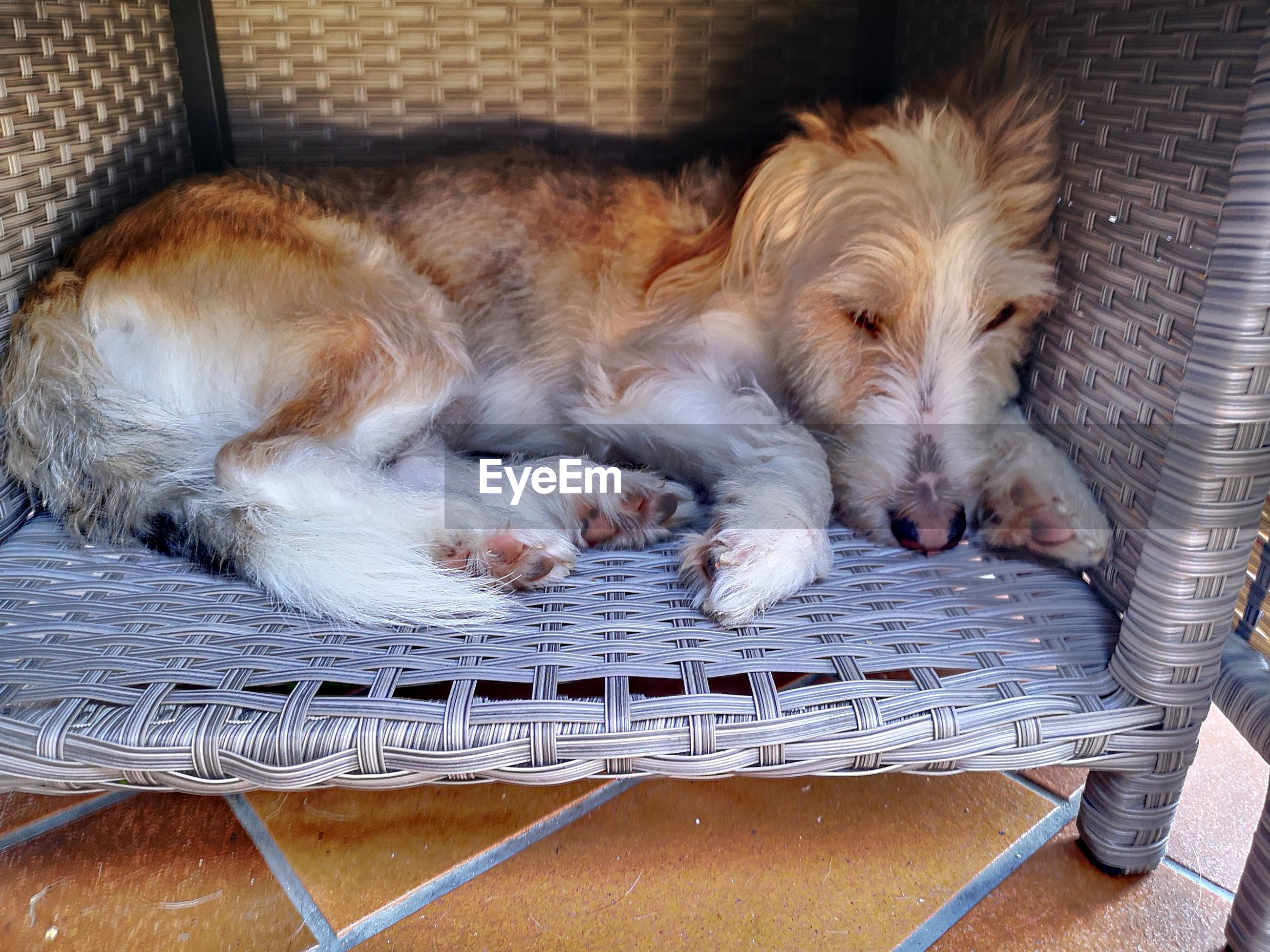 DOG SLEEPING IN FRONT OF BASKET