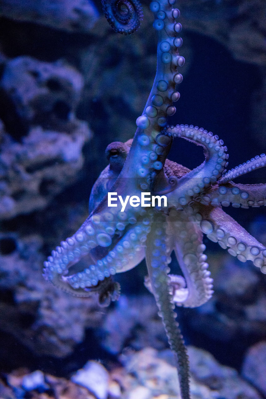 underwater, sea life, animal wildlife, animal themes, animal, sea, animals in the wild, water, marine, one animal, undersea, close-up, octopus, aquarium, tank, swimming, no people, animals in captivity, nature, outdoors, starfish