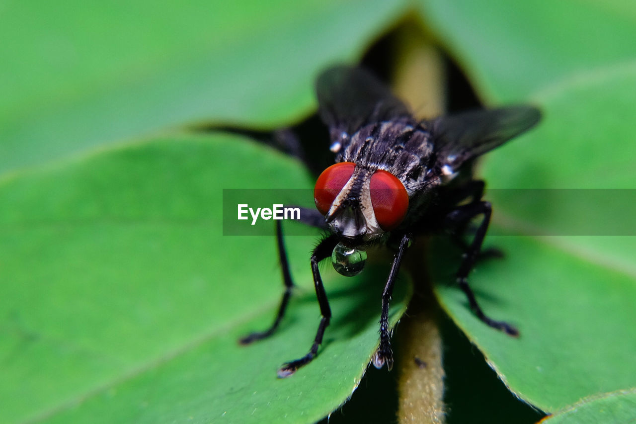 invertebrate, insect, animal, plant part, animal wildlife, animal themes, animals in the wild, leaf, green color, close-up, one animal, no people, selective focus, nature, day, plant, arthropod, zoology, macro, animal body part, animal leg, animal eye