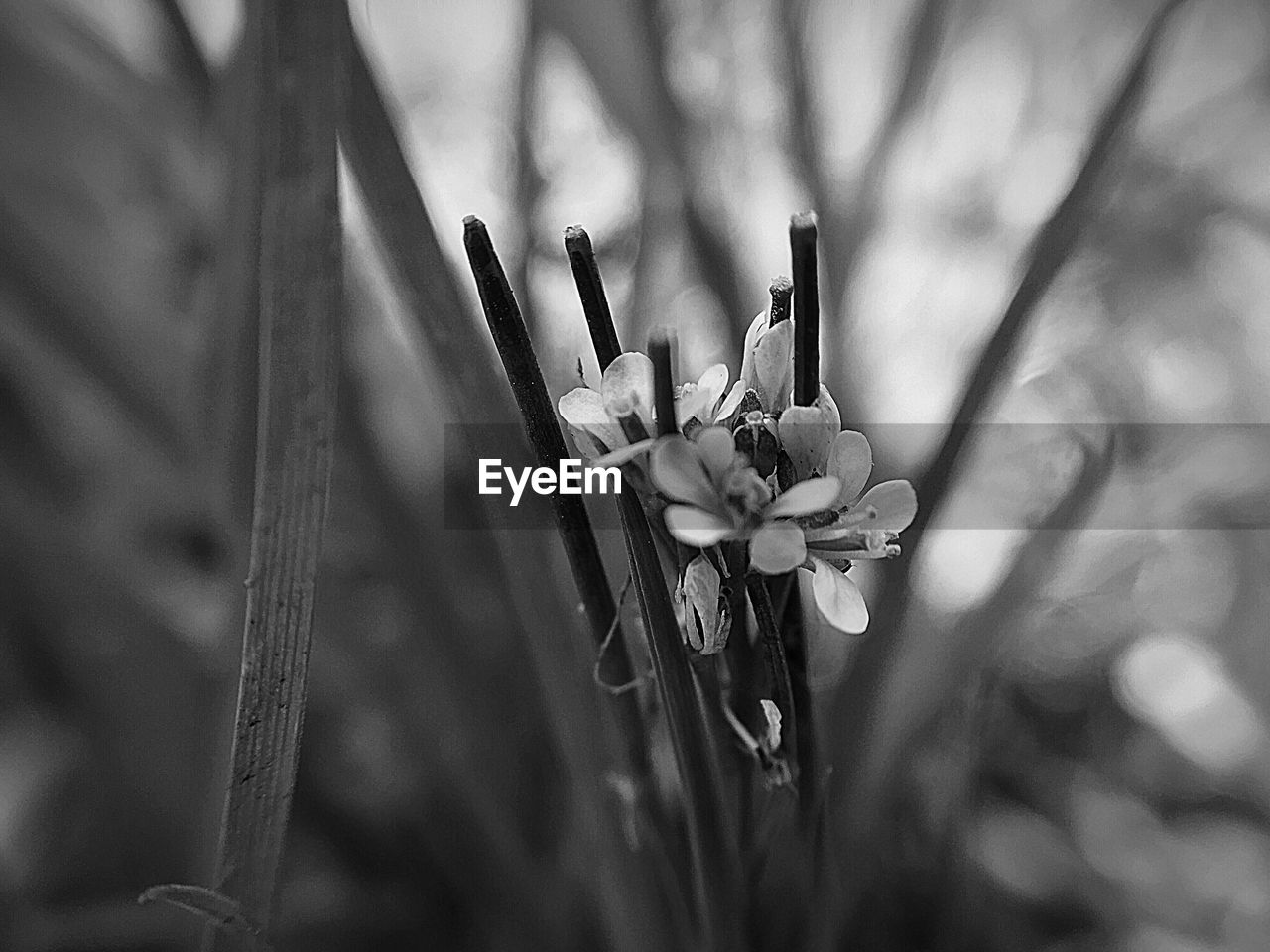 plant, close-up, flower, growth, flowering plant, focus on foreground, beauty in nature, fragility, vulnerability, nature, no people, petal, day, freshness, selective focus, outdoors, flower head, inflorescence, plant stem, tranquility