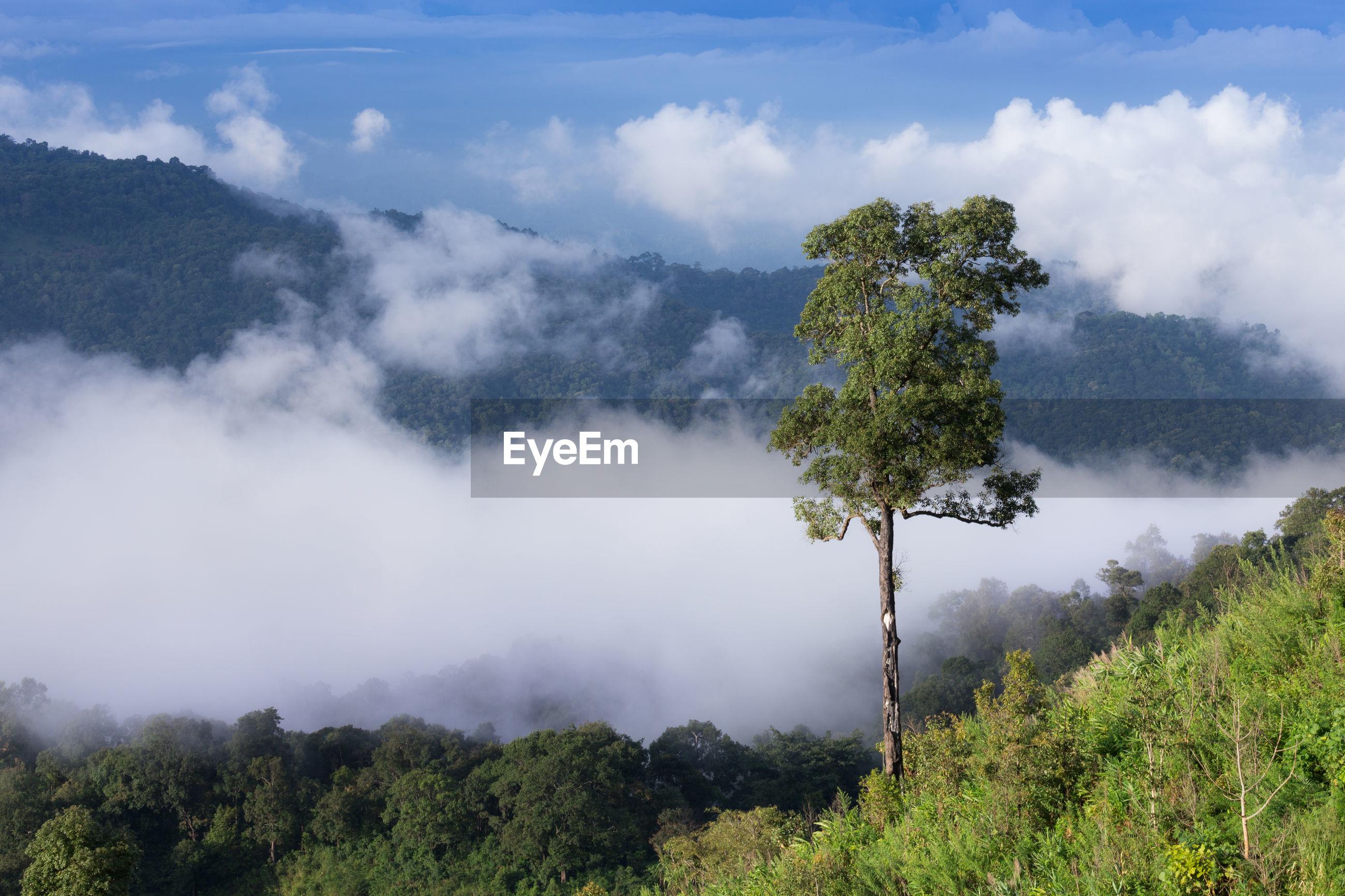 TREES ON MOUNTAIN AGAINST SKY