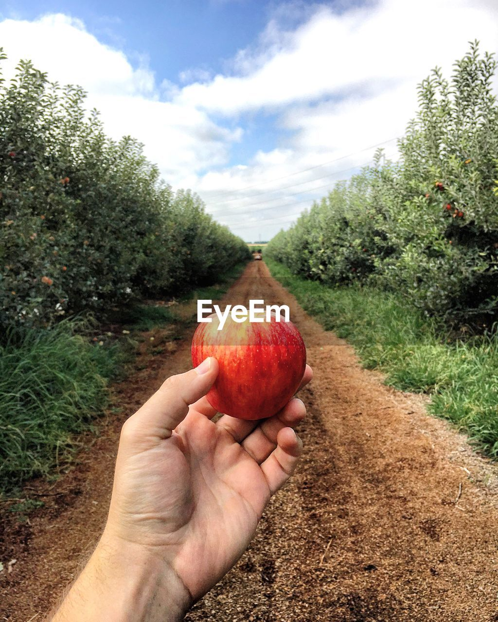 Cropped Image O Person Holding Apple On Field