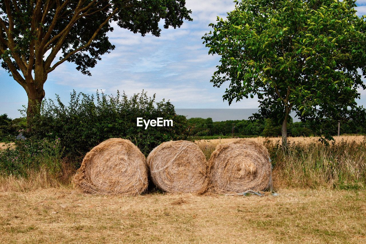 plant, tree, bale, hay, field, agriculture, landscape, farm, nature, land, sky, rural scene, tranquility, no people, growth, environment, tranquil scene, rolled up, cloud - sky, harvesting, outdoors