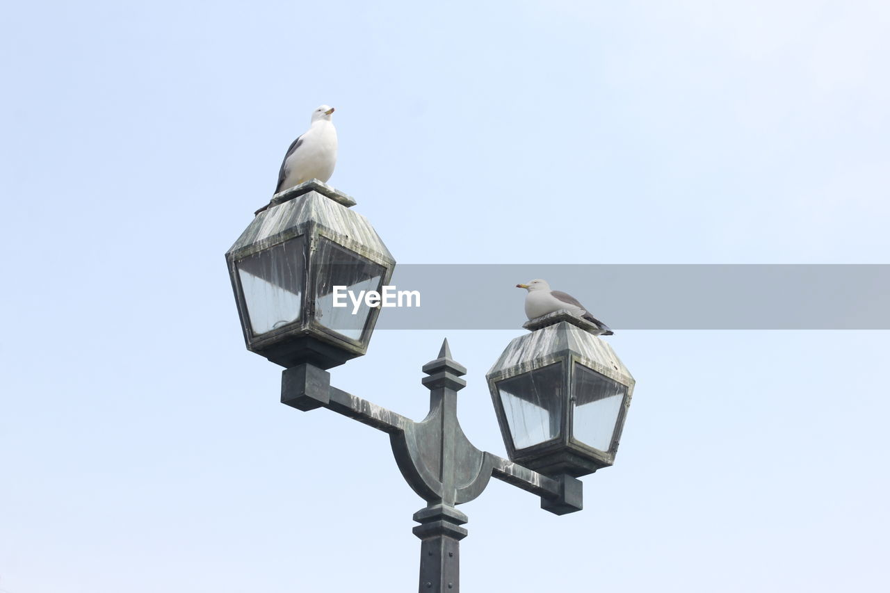 bird, animal themes, vertebrate, animal wildlife, animal, animals in the wild, low angle view, sky, perching, group of animals, lighting equipment, street light, nature, clear sky, no people, two animals, day, seagull, copy space, outdoors
