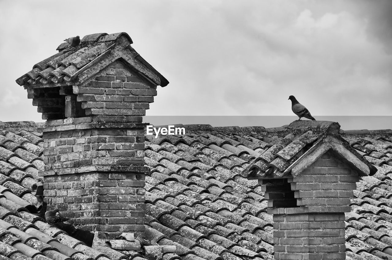 architecture, built structure, building exterior, animal themes, roof, sky, animal, bird, building, vertebrate, cloud - sky, animals in the wild, animal wildlife, low angle view, day, roof tile, no people, nature, one animal, perching, outdoors, stone wall, brick, ancient civilization