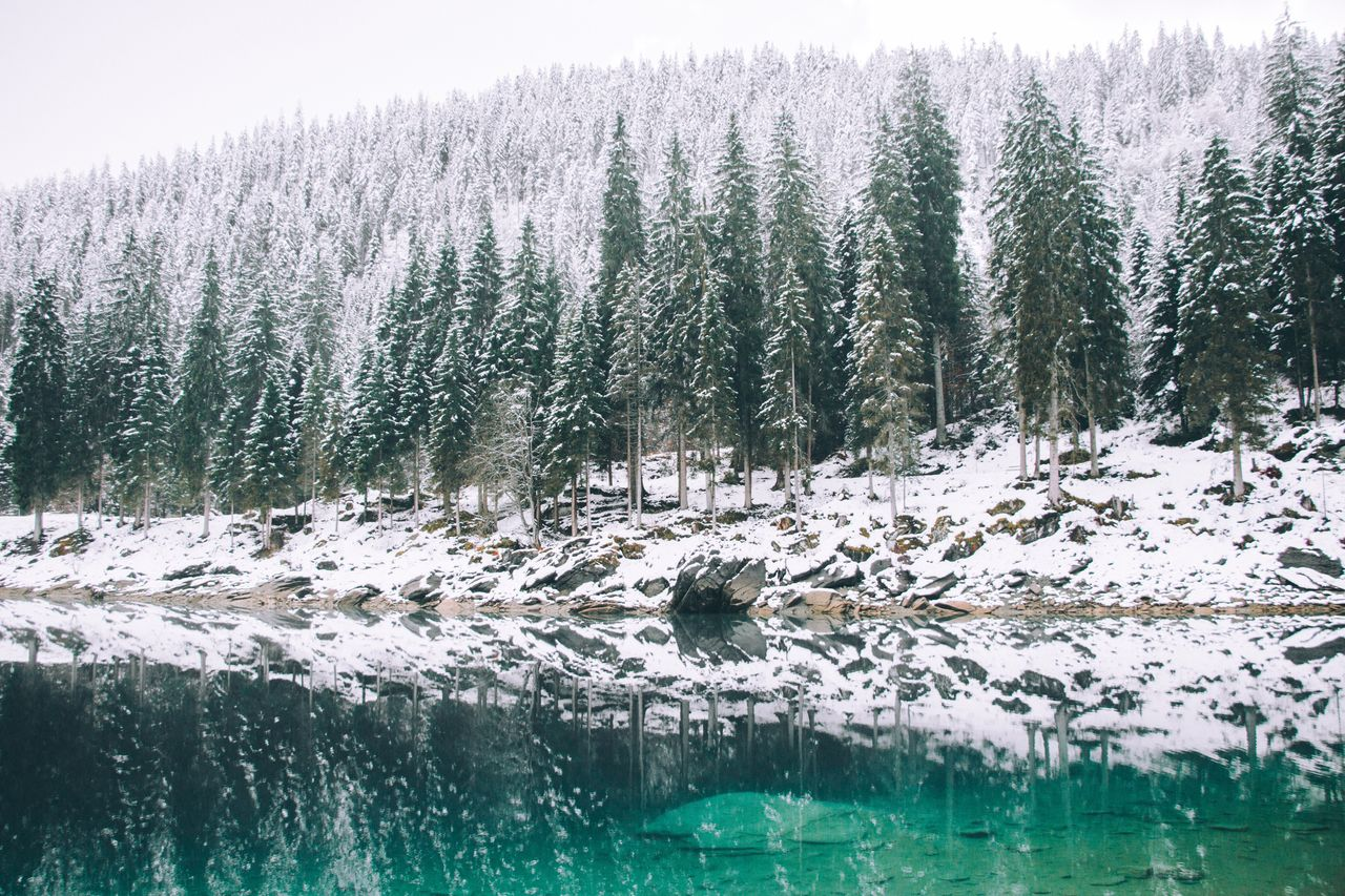 Trees by lake at forest during winter