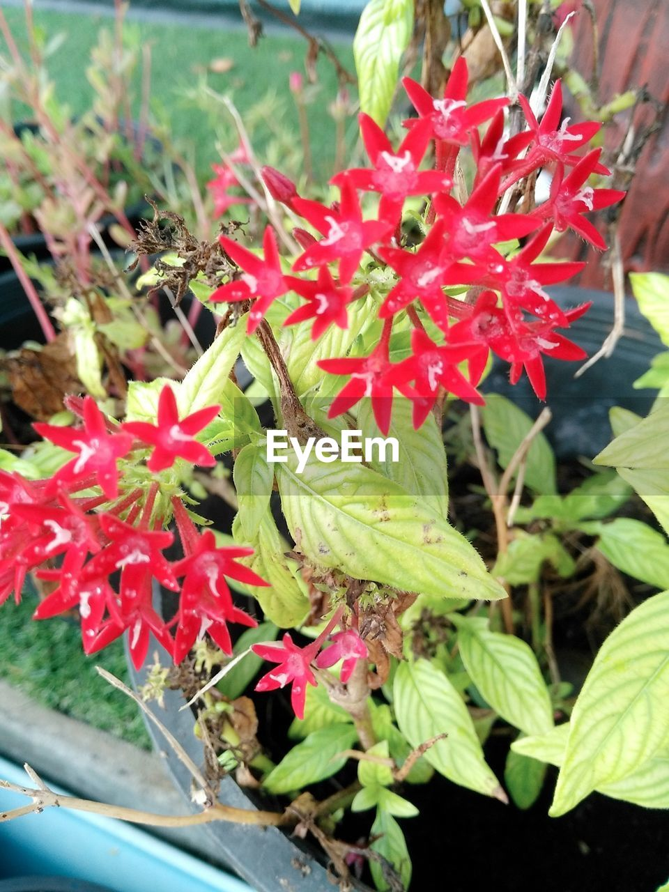 Growth Plant Nature Beauty In Nature Day Outdoors Fragility Flower Freshness Close-up No People Red Leaf Flower Head