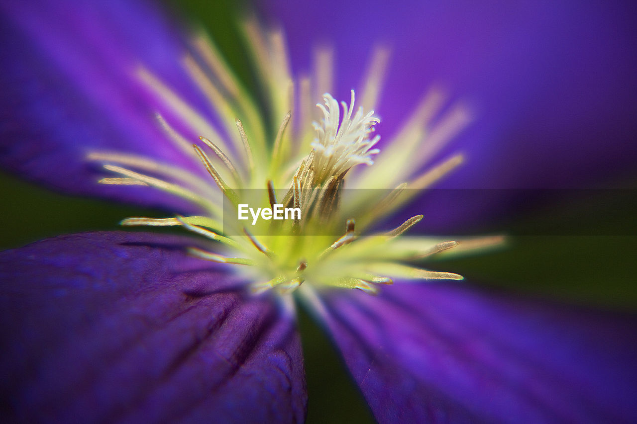 nature, flower, growth, fragility, beauty in nature, purple, selective focus, plant, no people, outdoors, freshness, close-up, night, flower head