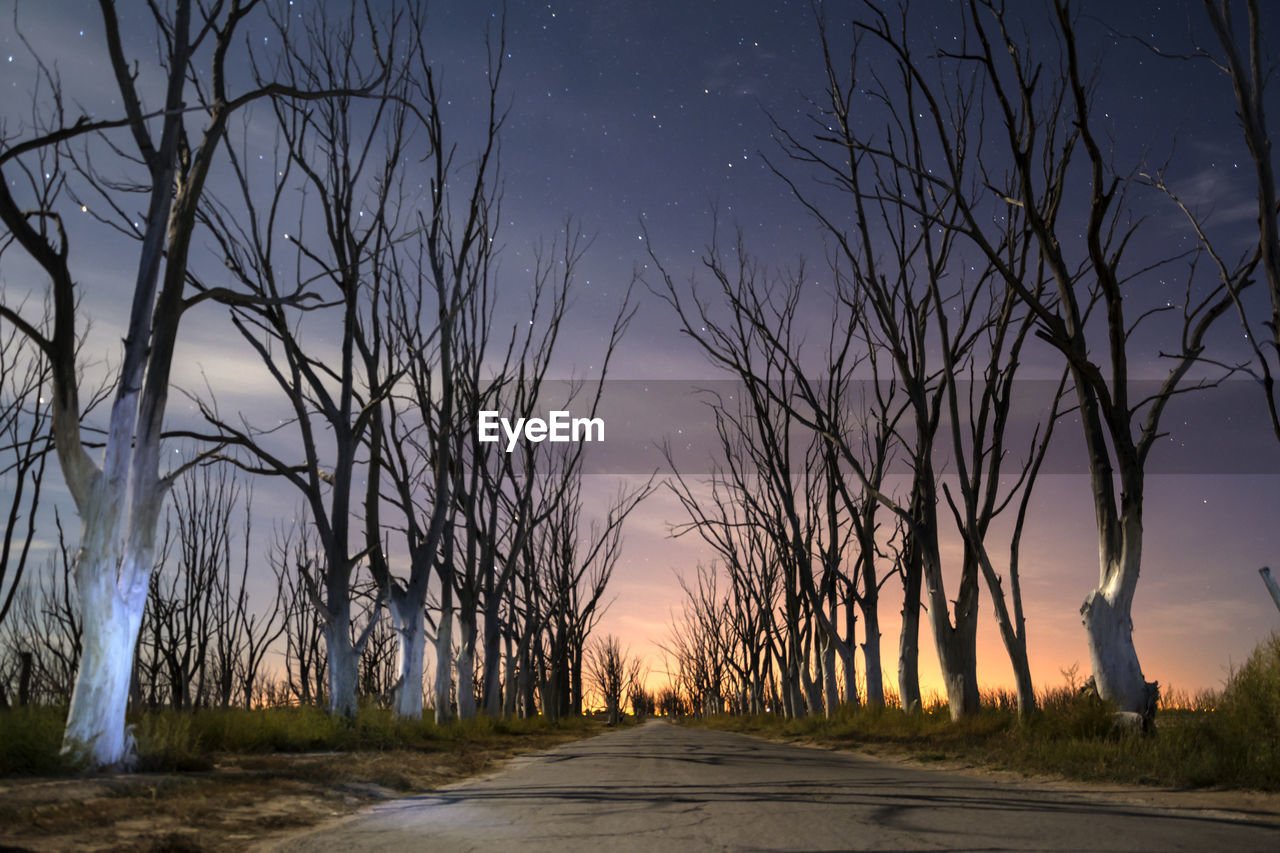 tree, direction, road, sky, plant, the way forward, bare tree, no people, tranquility, nature, transportation, tranquil scene, scenics - nature, diminishing perspective, beauty in nature, night, outdoors, land, non-urban scene, dusk, treelined