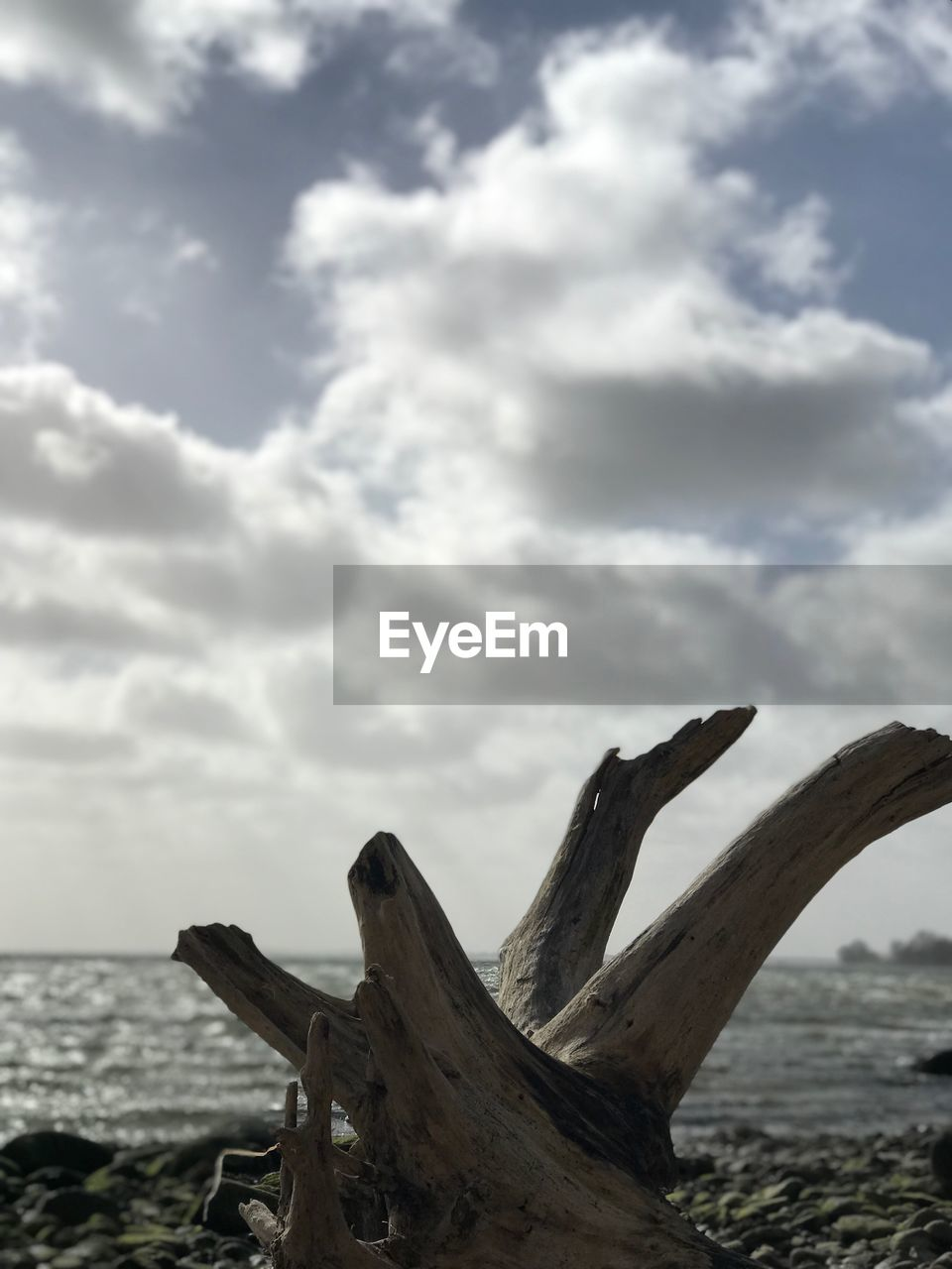 cloud - sky, sky, nature, water, day, no people, beauty in nature, tranquility, wood - material, land, sea, beach, scenics - nature, driftwood, tranquil scene, tree, wood, outdoors, non-urban scene
