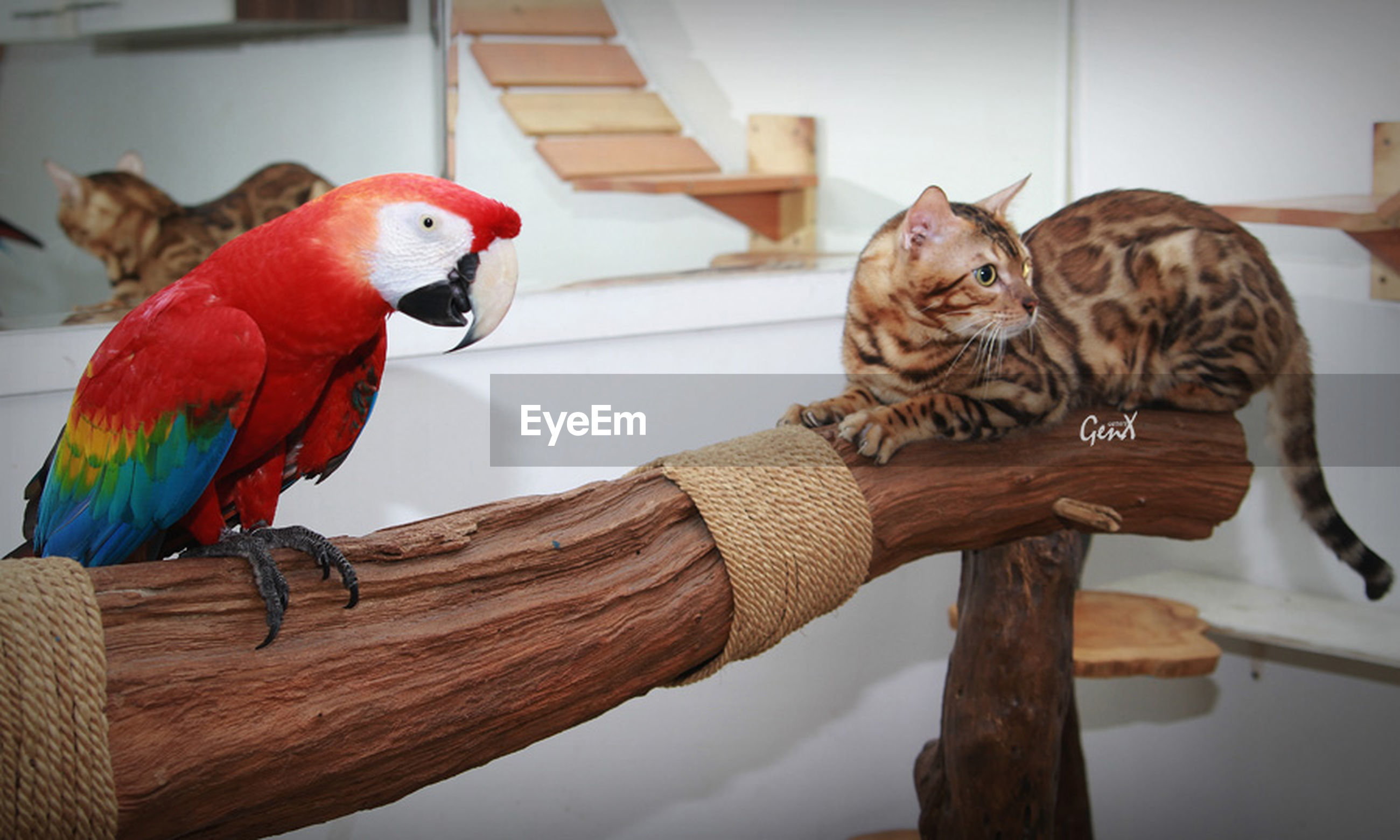 animal themes, bird, one animal, perching, wood - material, animal representation, parrot, domestic animals, two animals, full length, animals in the wild, low angle view, cage, day, multi colored, wildlife, art, art and craft, wall - building feature, no people