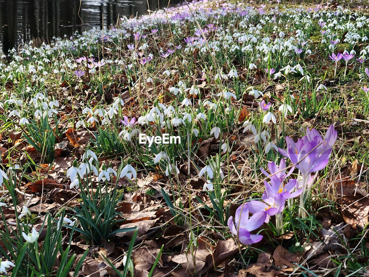 flowering plant, flower, plant, vulnerability, fragility, growth, freshness, beauty in nature, petal, land, nature, field, close-up, purple, no people, day, flower head, springtime, inflorescence, grass, crocus, outdoors, iris, flowerbed