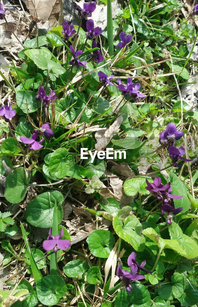 purple, growth, flower, plant, nature, high angle view, no people, fragility, petal, outdoors, leaf, beauty in nature, green color, day, blooming, freshness, close-up, flower head