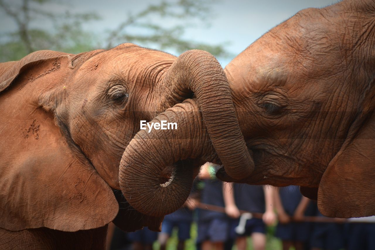 Close-up of elephants playing outdoors