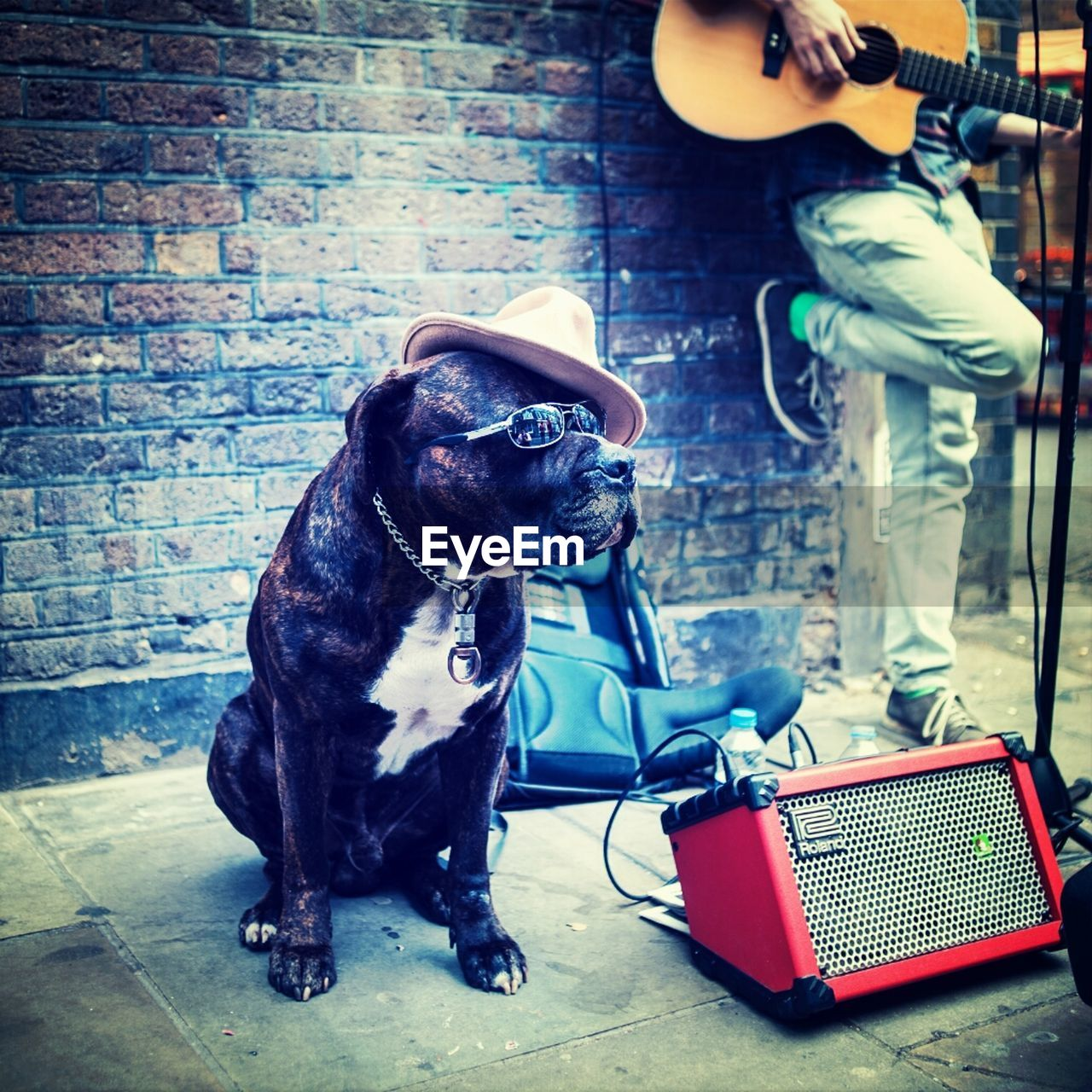 dog, brick wall, pets, animal themes, one animal, domestic animals, mammal, indoors, musician, day, people