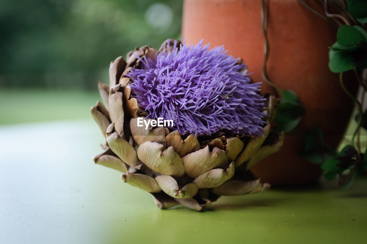 flower, flowering plant, purple, freshness, plant, beauty in nature, vulnerability, flower head, inflorescence, close-up, fragility, petal, focus on foreground, nature, growth, no people, day, botany, leaf