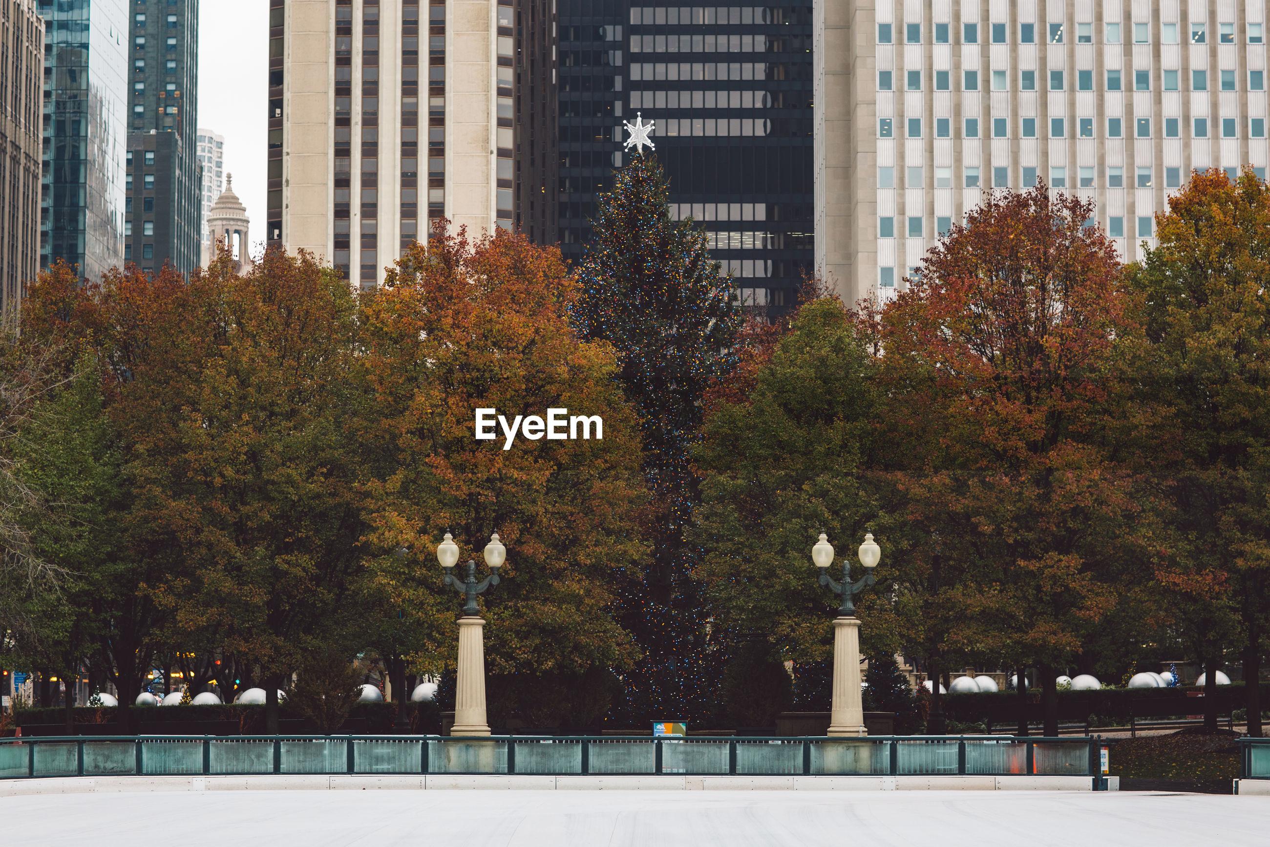 TREES IN CITY AGAINST BUILDINGS