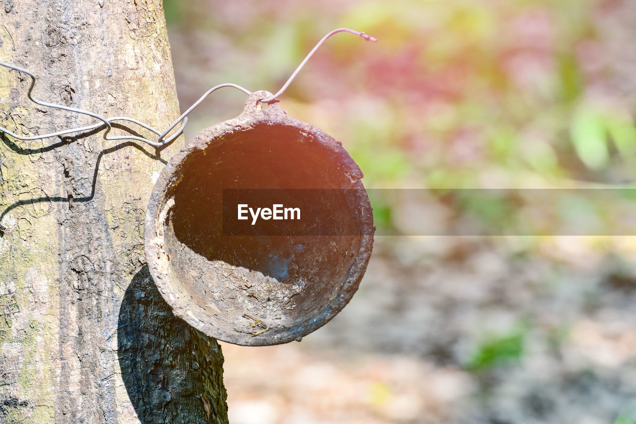 focus on foreground, close-up, day, no people, tree, food, nature, fruit, food and drink, plant, outdoors, trunk, tree trunk, growth, branch, healthy eating, sunlight, hanging, selective focus, freshness, ripe