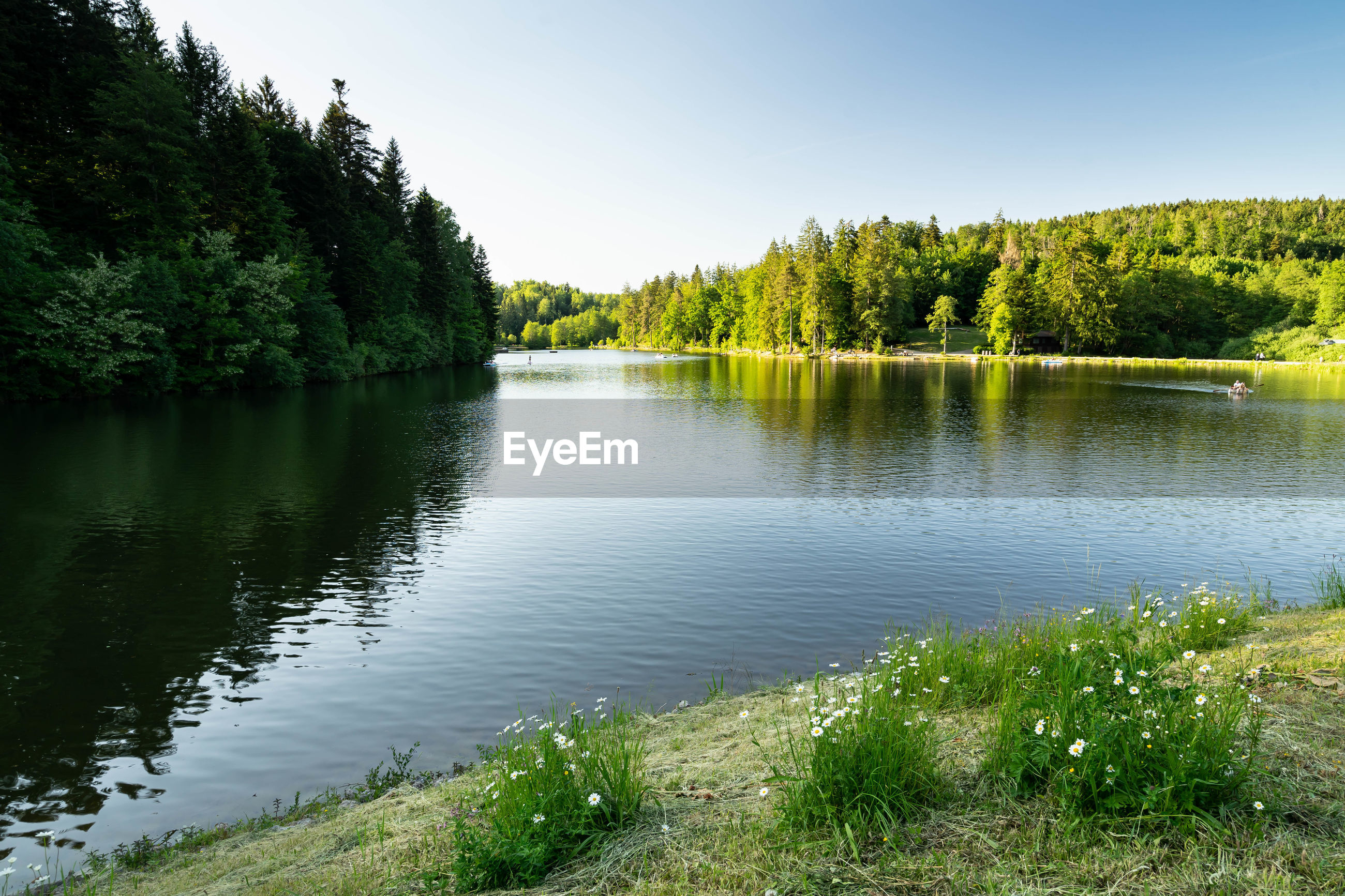 SCENIC VIEW OF LAKE AGAINST TREES AGAINST CLEAR SKY