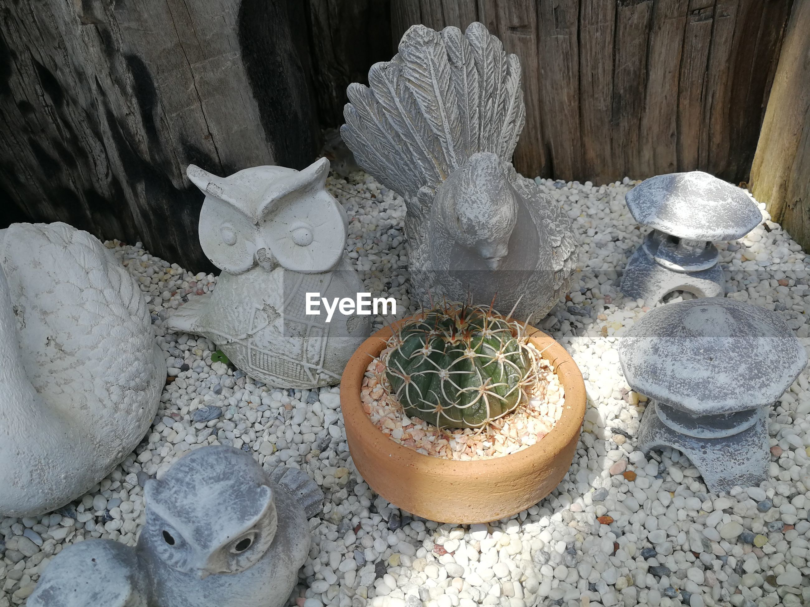 High angle view of succulent plant on rock