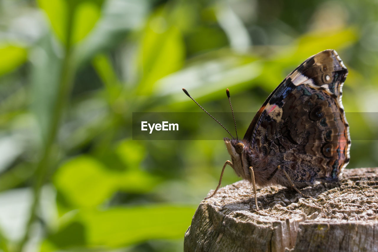 animals in the wild, animal, animal themes, animal wildlife, invertebrate, insect, one animal, focus on foreground, day, animal wing, close-up, nature, no people, solid, wood - material, outdoors, rock, zoology, rock - object, green color, butterfly - insect