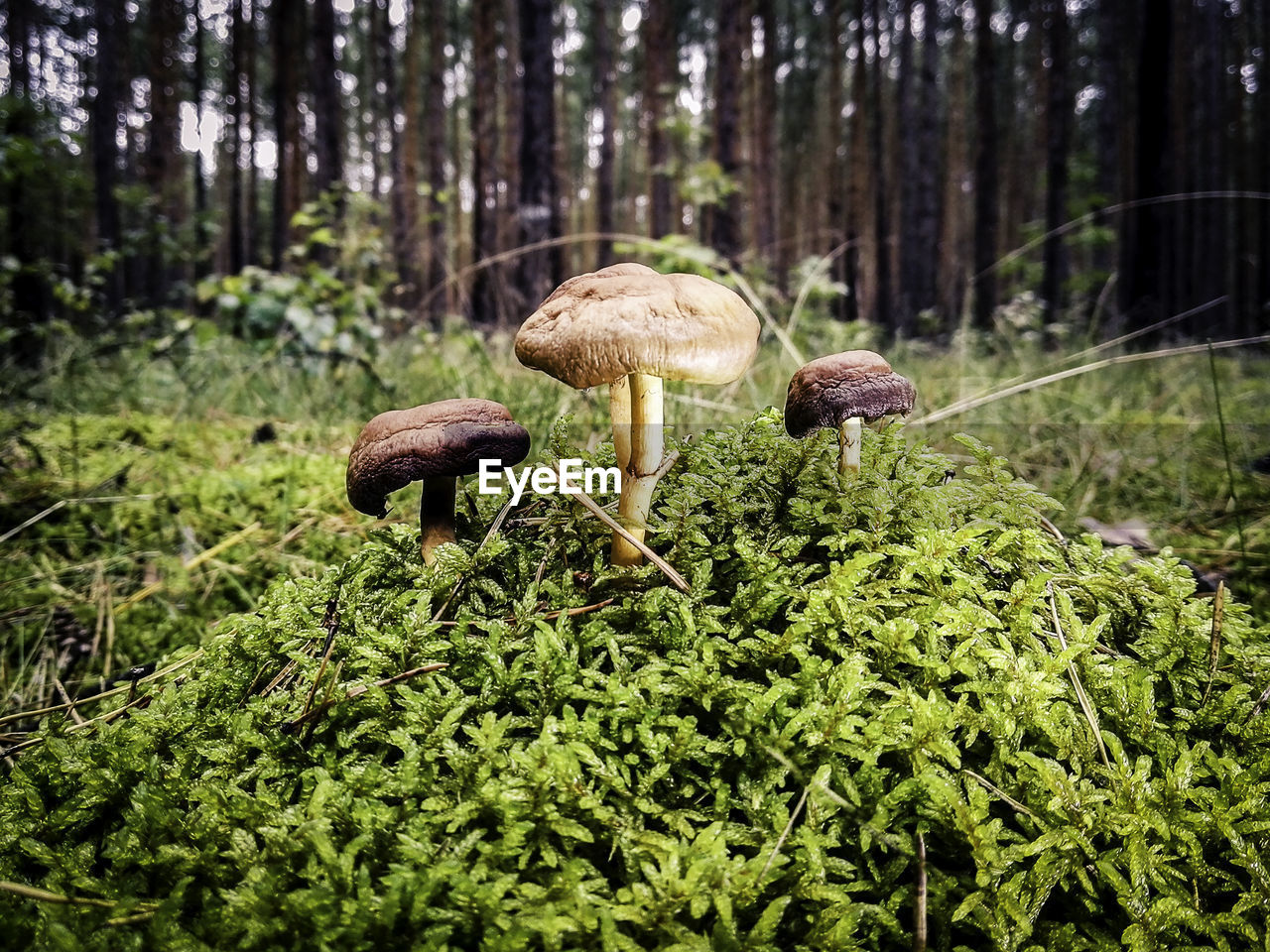 Close-Up Of Mushrooms Growing On Tree In Forest