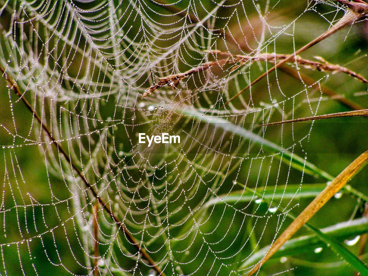spider web, fragility, close-up, vulnerability, focus on foreground, no people, beauty in nature, complexity, drop, natural pattern, day, nature, animal themes, wet, animal, pattern, plant, full frame, water, outdoors, web, dew, concentric