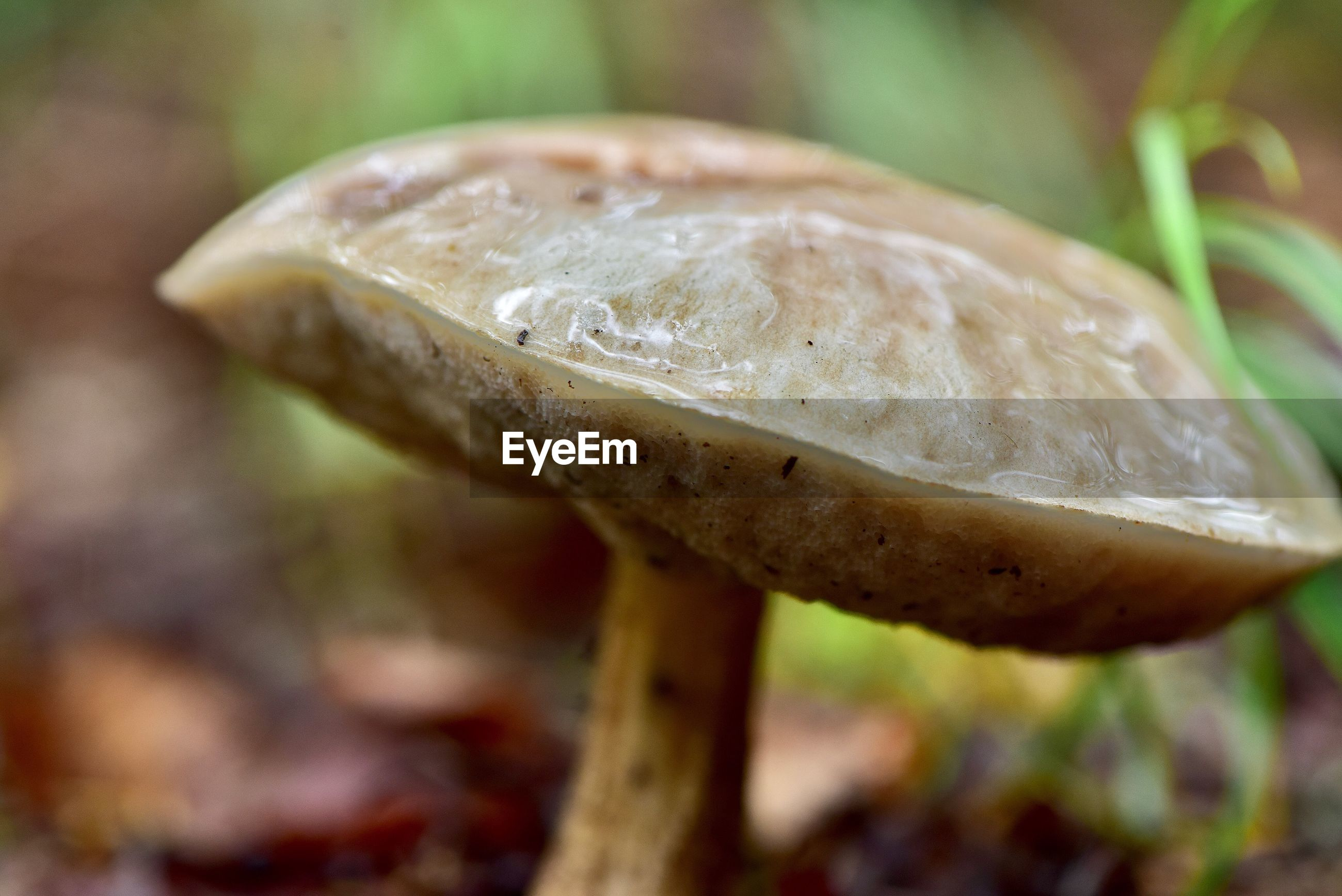 mushroom, fungus, food, close-up, vegetable, focus on foreground, growth, plant, edible mushroom, no people, toadstool, freshness, selective focus, day, land, nature, beauty in nature, food and drink, vulnerability, fragility, outdoors