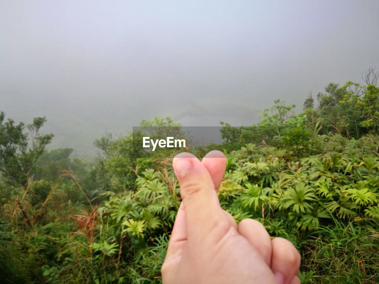 human hand, human body part, human finger, real people, one person, unrecognizable person, personal perspective, tree, nature, plant, outdoors, day, close-up, sky, beauty in nature, people