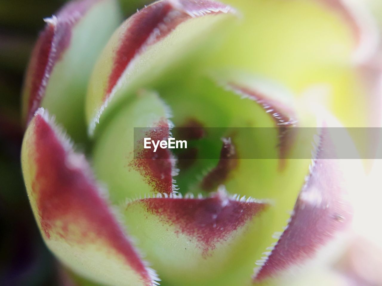 close-up, freshness, healthy eating, fruit, no people, green color, food and drink, food, wellbeing, selective focus, slice, kiwi, flower, beauty in nature, flowering plant, day, plant, focus on foreground, nature, indoors, flower head
