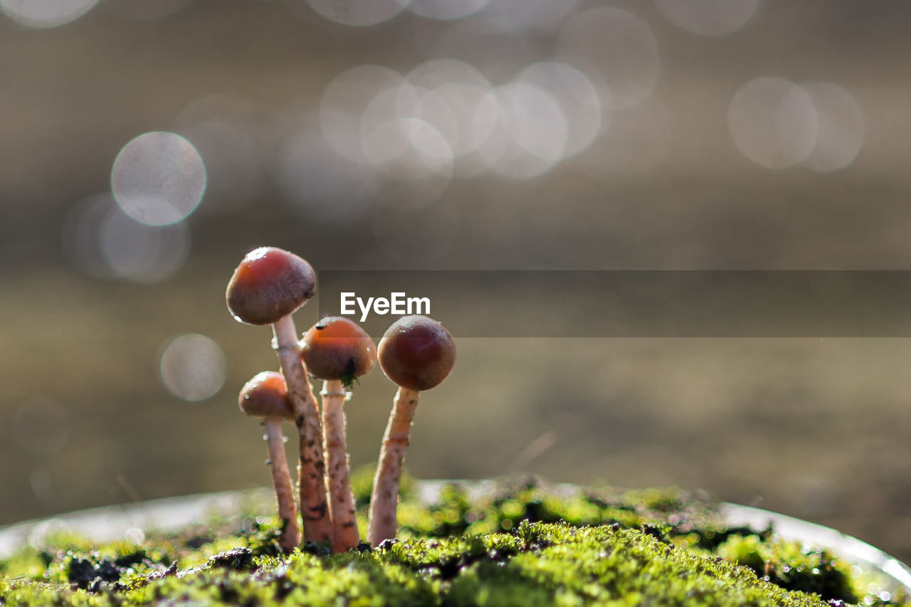 growth, close-up, no people, nature, food, plant, focus on foreground, day, vegetable, selective focus, beauty in nature, moss, fungus, mushroom, outdoors, food and drink, freshness, sunlight, fragility, healthy eating