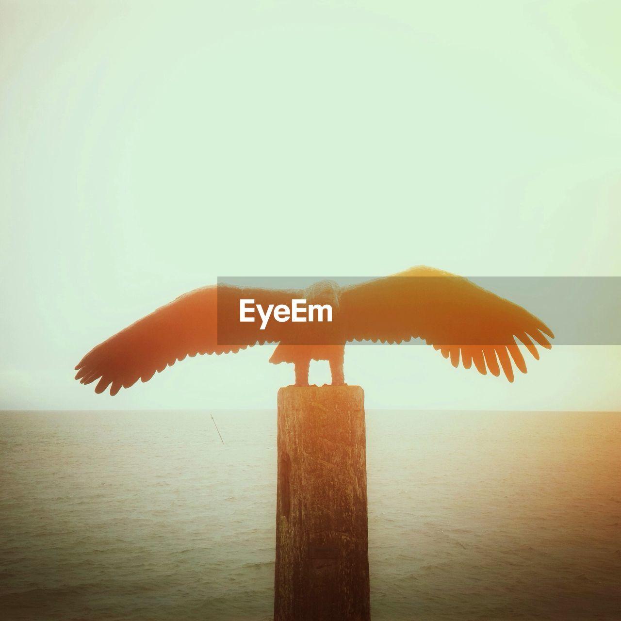 An eagle on a pole