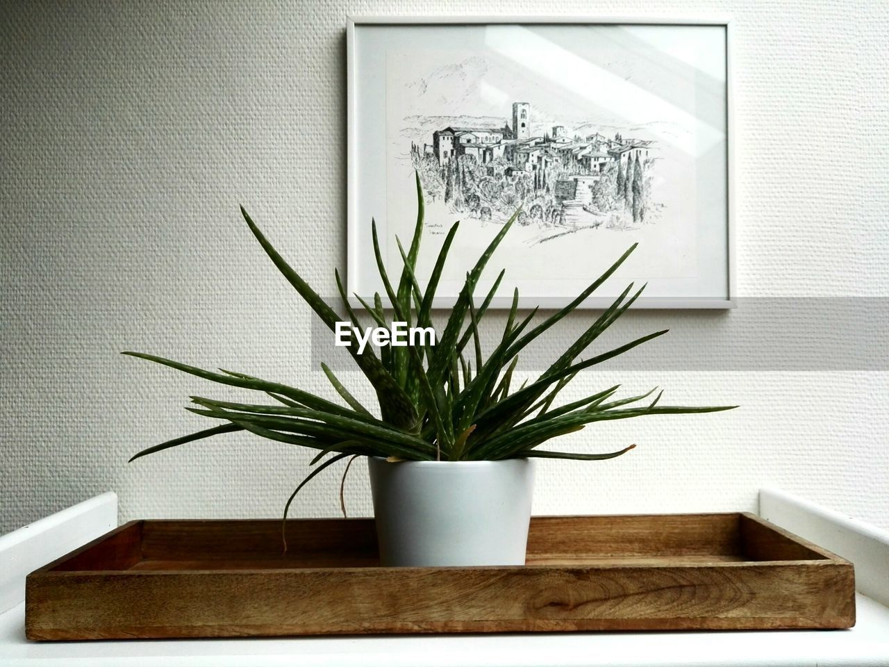 indoors, potted plant, no people, paper, growth, day, close-up