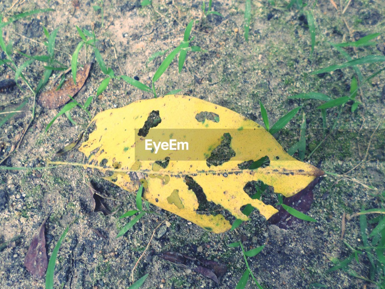 HIGH ANGLE VIEW OF A YELLOW LEAF ON A LAND