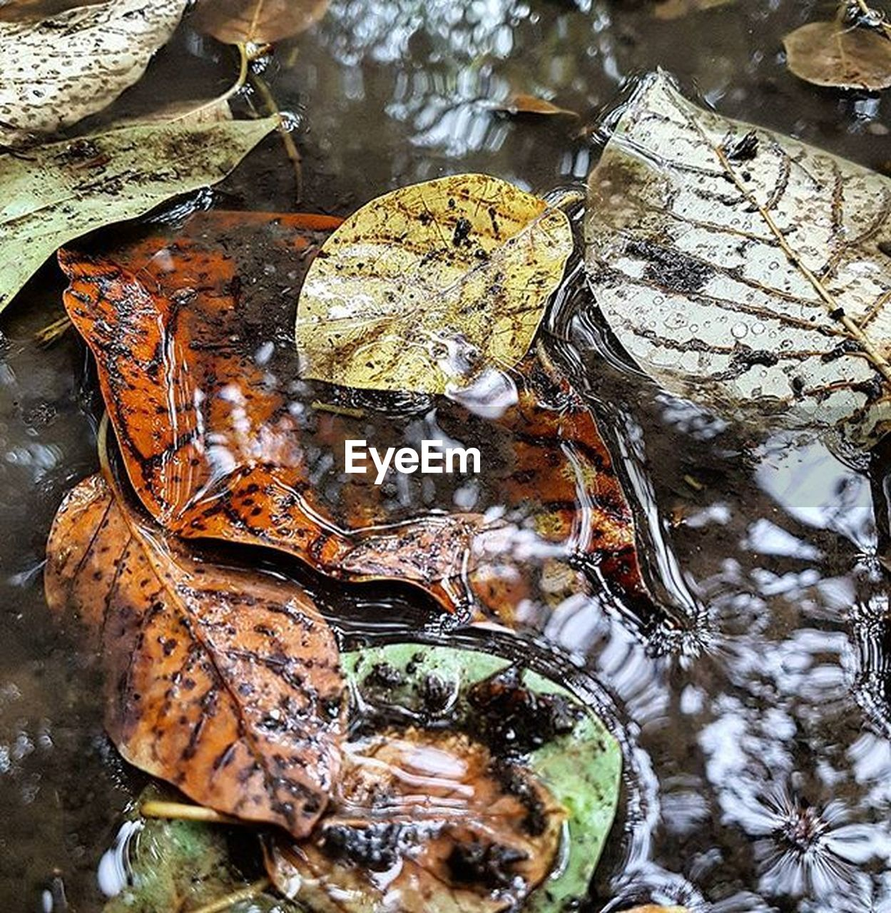close-up, no people, water, nature, leaf, day, plant part, high angle view, wet, reflection, rock, focus on foreground, outdoors, solid, cold temperature, rock - object, animal wildlife, winter