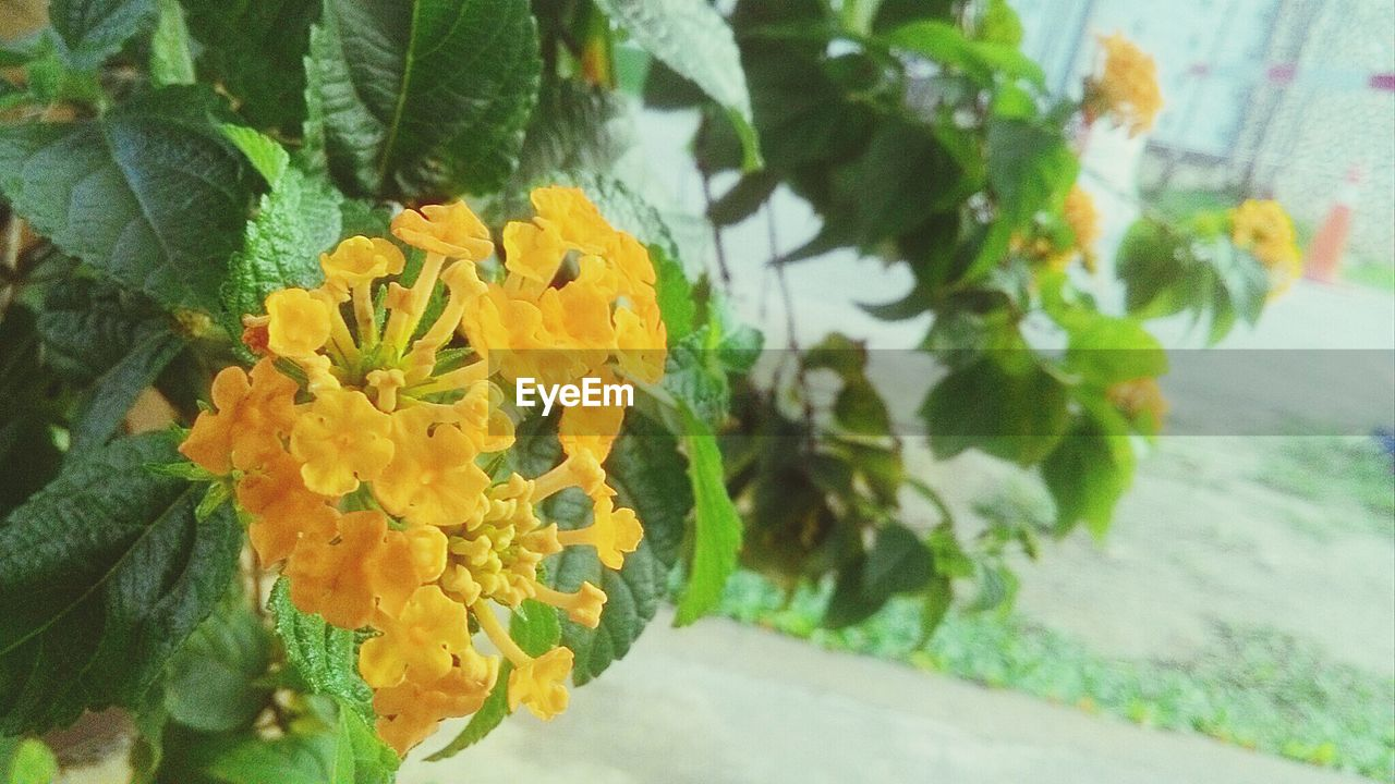 flower, petal, leaf, freshness, yellow, flower head, nature, fragility, plant, growth, close-up, day, beauty in nature, no people, outdoors, marigold
