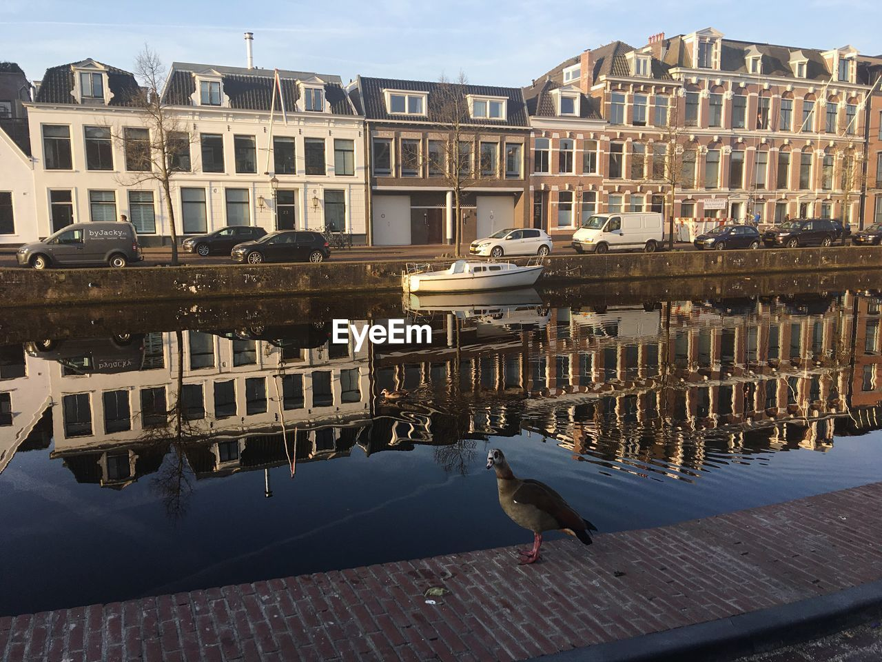 building exterior, built structure, architecture, city, animals in the wild, bird, animal themes, vertebrate, building, animal, animal wildlife, day, nature, water, sky, no people, flying, residential district, outdoors, seagull, canal