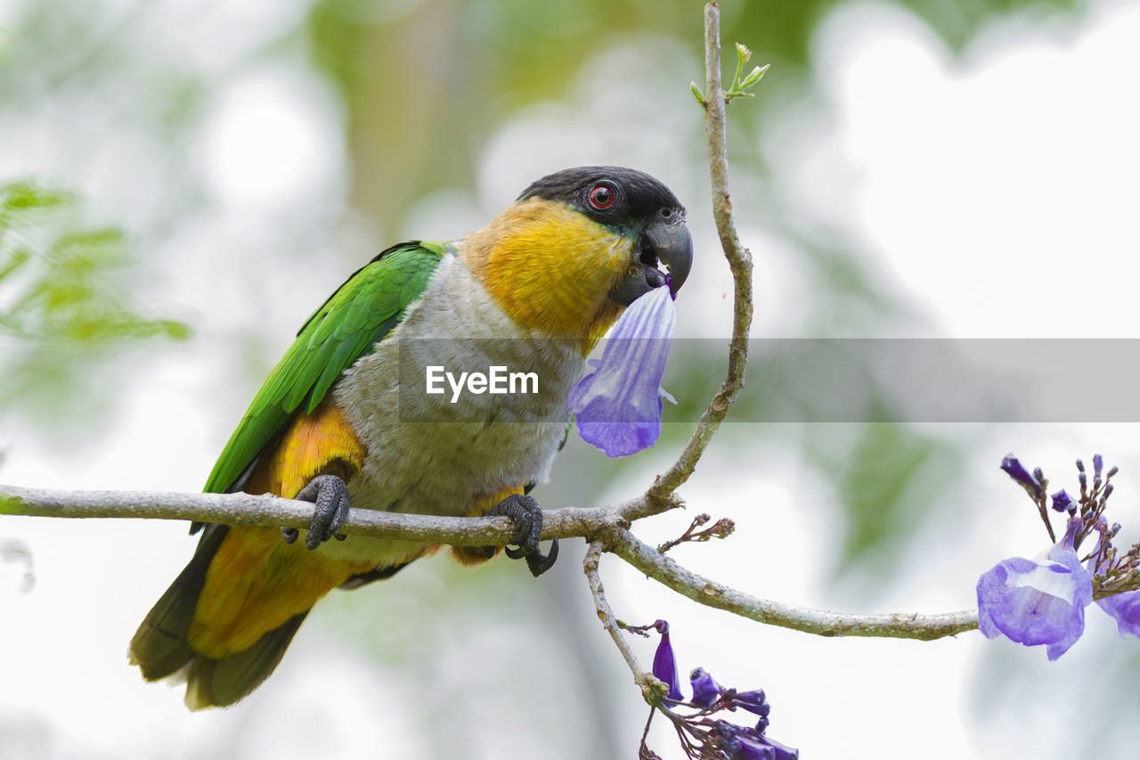 CLOSE-UP OF A BIRD PERCHING ON TWIG