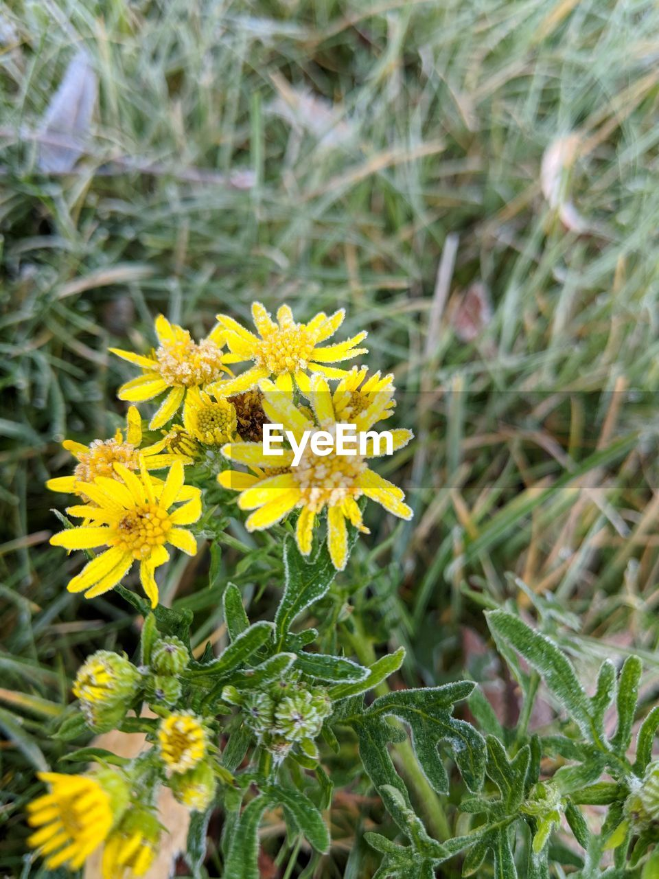 flower, growth, plant, fragility, petal, nature, yellow, beauty in nature, flower head, freshness, outdoors, day, field, blooming, no people, green color, close-up, leaf, grass, animal themes
