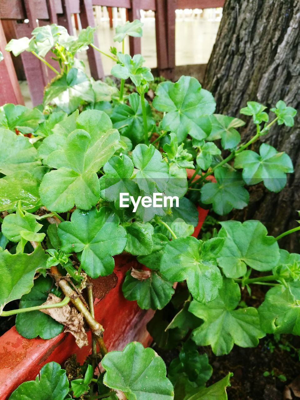 leaf, growth, plant, green color, day, outdoors, nature, no people, freshness, close-up, ivy, fragility, beauty in nature, food
