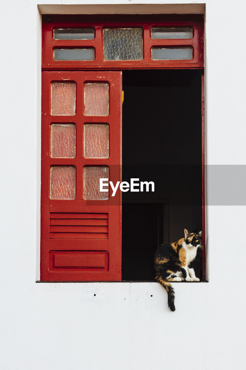 pets, mammal, one animal, domestic, domestic animals, vertebrate, feline, cat, window, no people, built structure, architecture, domestic cat, building exterior, red, day, sitting