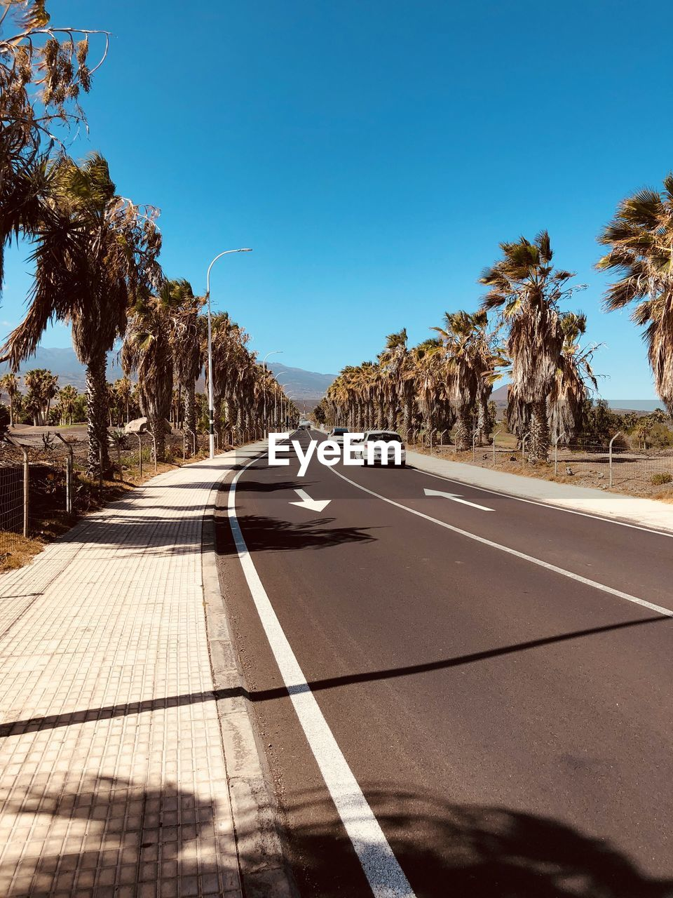 tree, transportation, sunlight, direction, sky, the way forward, plant, nature, road, road marking, car, marking, symbol, tropical climate, sign, palm tree, day, clear sky, no people, motor vehicle, diminishing perspective, outdoors, dividing line, long