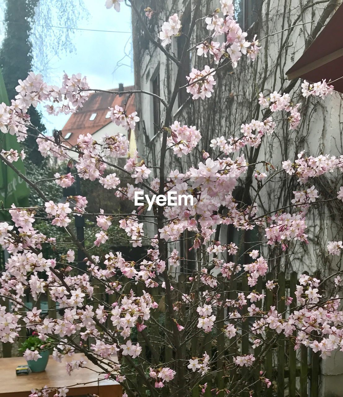 flower, growth, blossom, tree, nature, no people, fragility, day, spring, beauty in nature, blooming, branch, outdoors, freshness, close-up